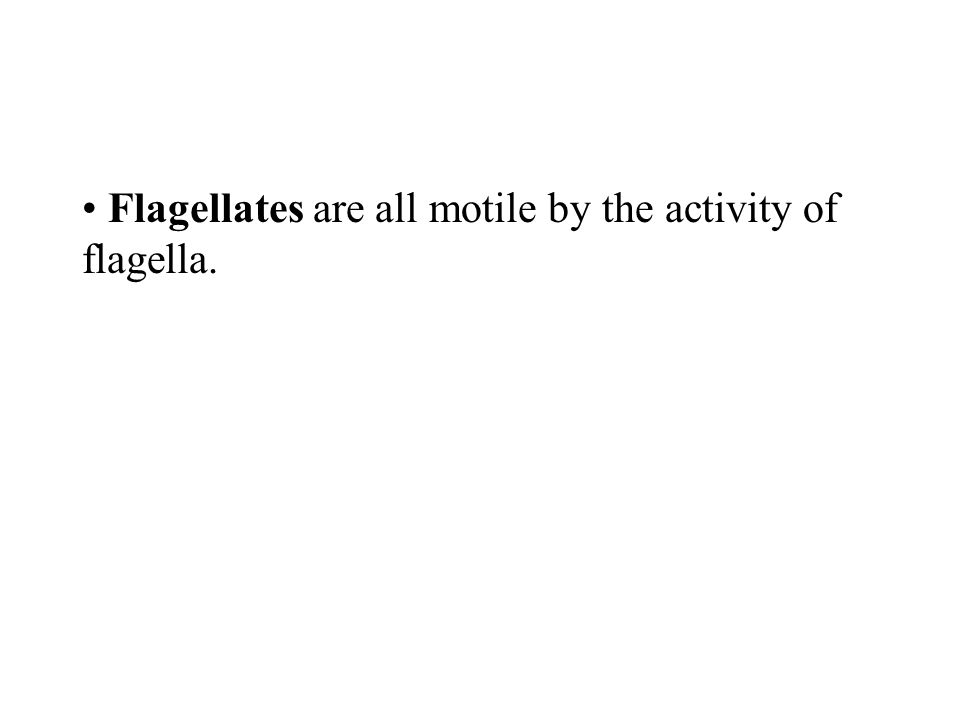 Flagellates are all motile by the activity of flagella.