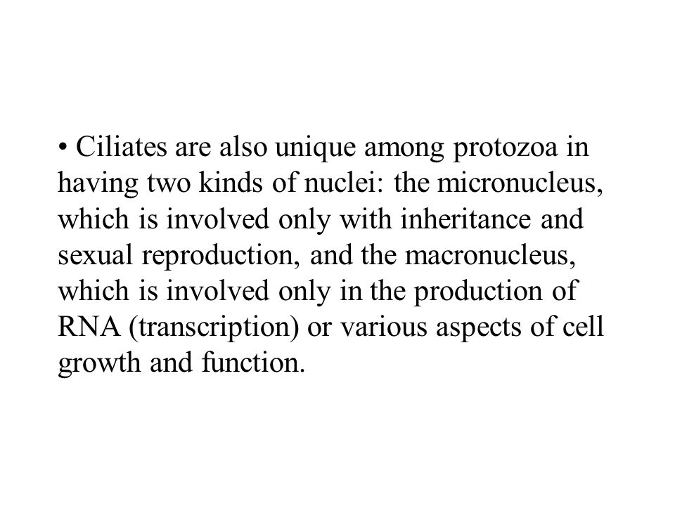 Ciliates are also unique among protozoa in having two kinds of nuclei: the micronucleus, which is involved only with inheritance and sexual reproduction, and the macronucleus, which is involved only in the production of RNA (transcription) or various aspects of cell growth and function.