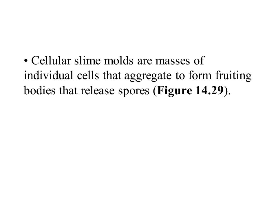 Cellular slime molds are masses of individual cells that aggregate to form fruiting bodies that release spores (Figure 14.29).