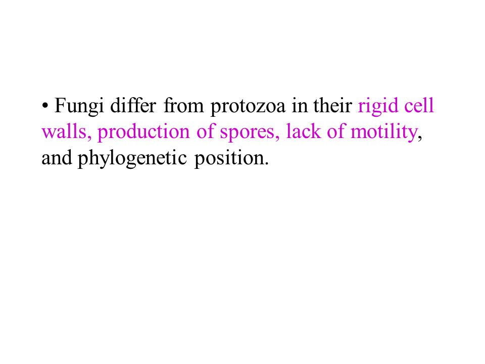 Fungi differ from protozoa in their rigid cell walls, production of spores, lack of motility, and phylogenetic position.