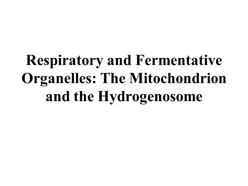 Respiratory and Fermentative Organelles: The Mitochondrion and the Hydrogenosome