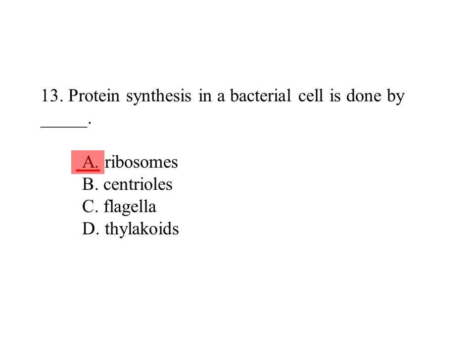 13. Protein synthesis in a bacterial cell is done by _____. A
