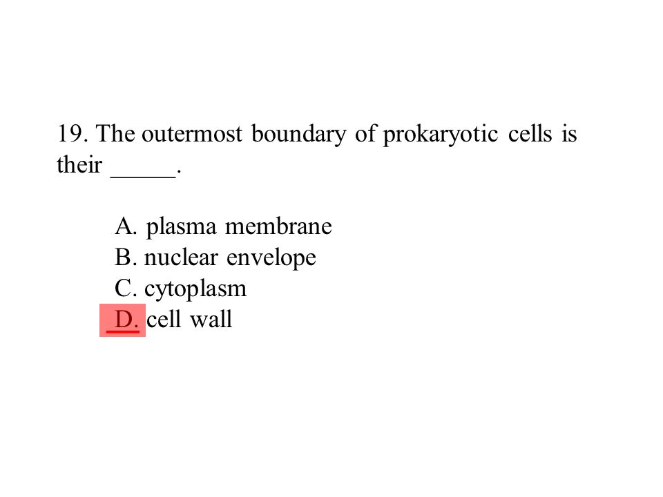 19. The outermost boundary of prokaryotic cells is their _____. A