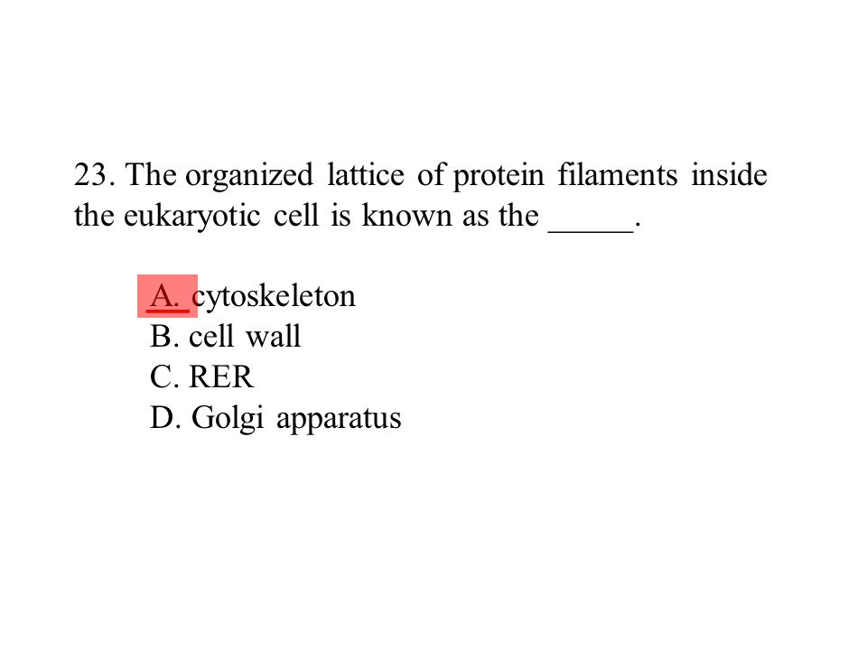 23. The organized lattice of protein filaments inside the eukaryotic cell is known as the _____. A. cytoskeleton B. cell wall C. RER D. Golgi apparatus