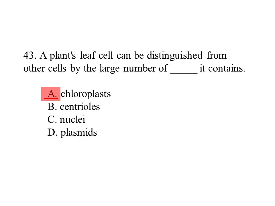 43. A plant s leaf cell can be distinguished from other cells by the large number of _____ it contains. A. chloroplasts B. centrioles C. nuclei D. plasmids
