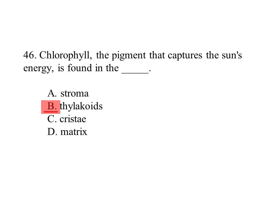 46. Chlorophyll, the pigment that captures the sun s energy, is found in the _____. A. stroma B. thylakoids C. cristae D. matrix