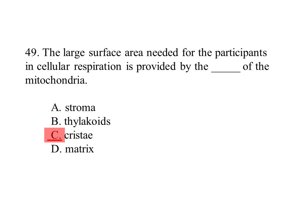 49. The large surface area needed for the participants in cellular respiration is provided by the _____ of the mitochondria. A. stroma B. thylakoids C. cristae D. matrix