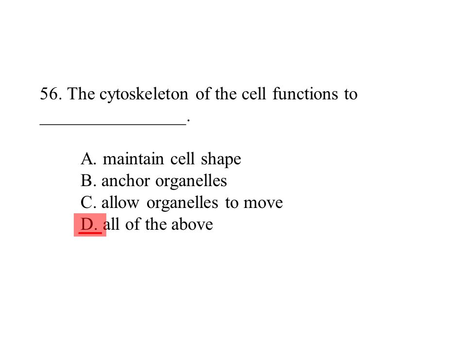 56. The cytoskeleton of the cell functions to ________________. A