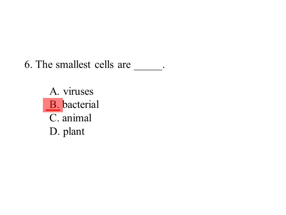 6. The smallest cells are _____. A. viruses B. bacterial C. animal D