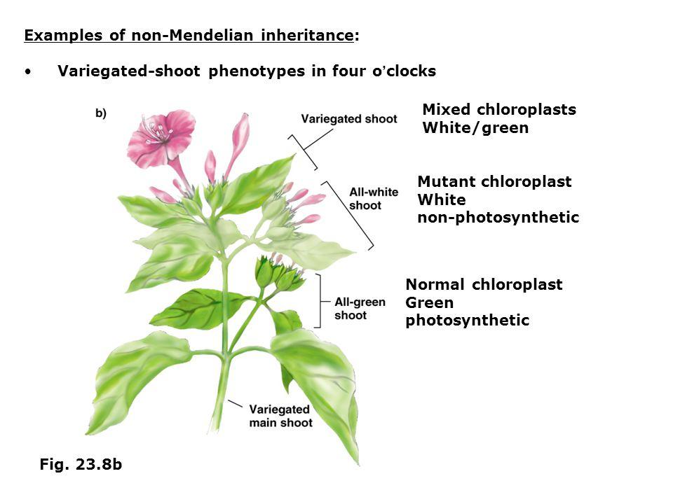 Examples of non-Mendelian inheritance: