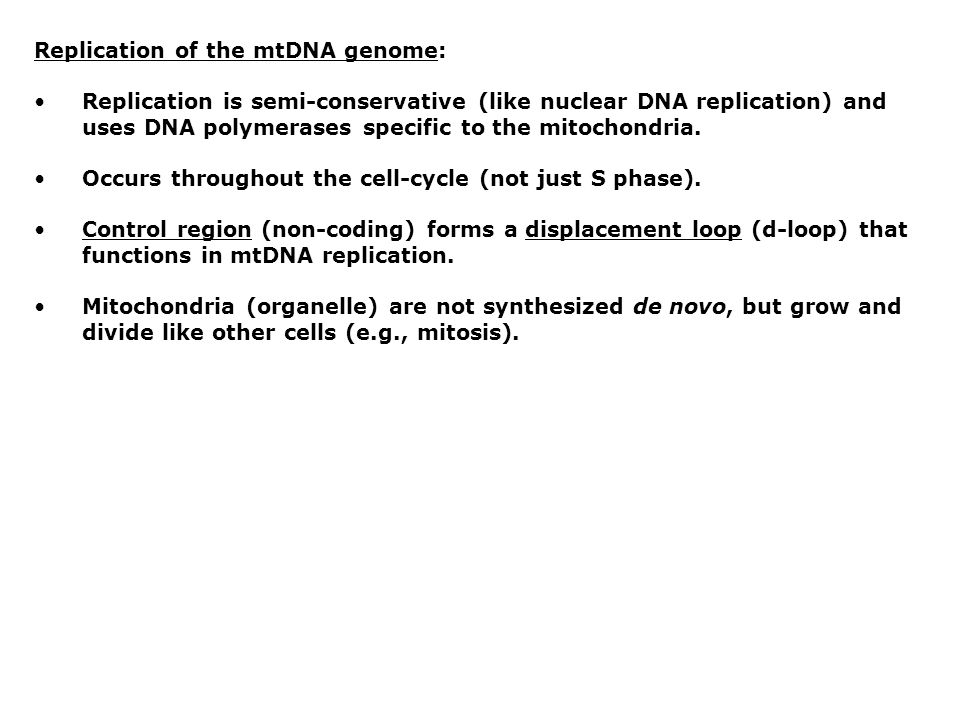 Replication of the mtDNA genome: