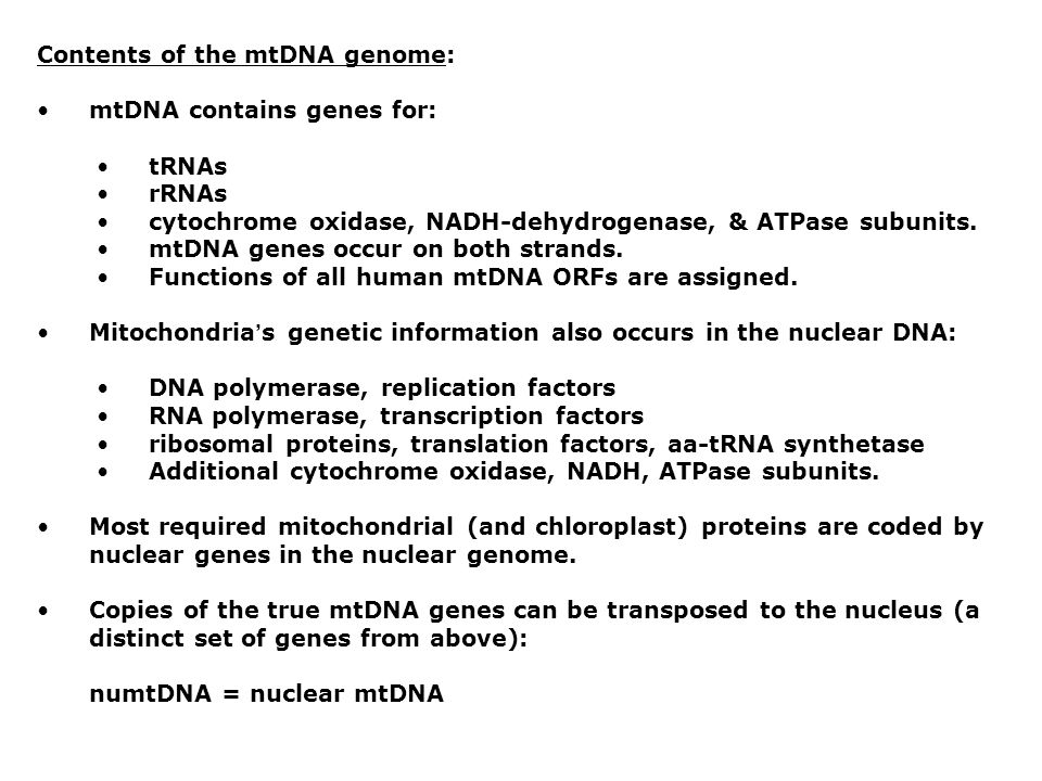 Contents of the mtDNA genome:
