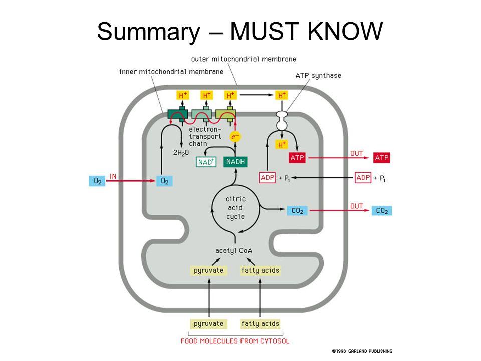 Summary – MUST KNOW
