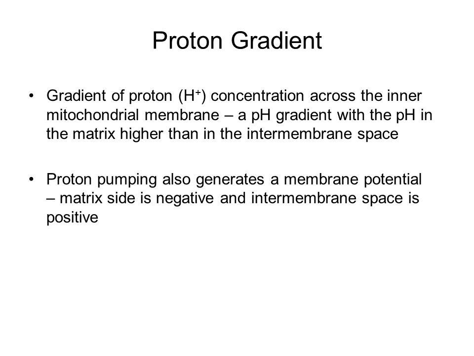 Proton Gradient