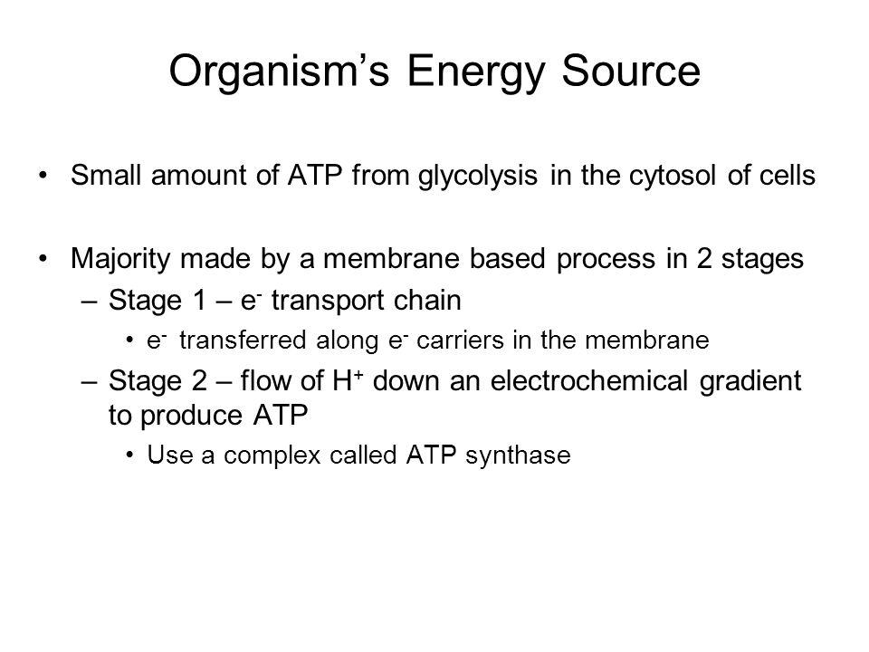 Organism's Energy Source