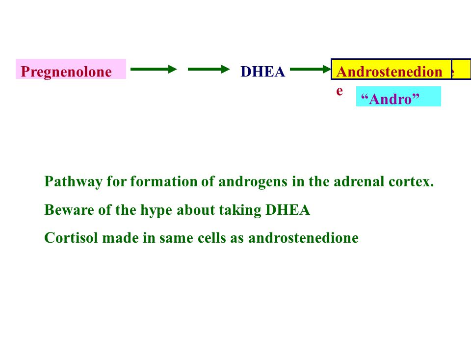 Pregnenolone DHEA. Androstenedione. Andro Androstenedione. Pathway for formation of androgens in the adrenal cortex.