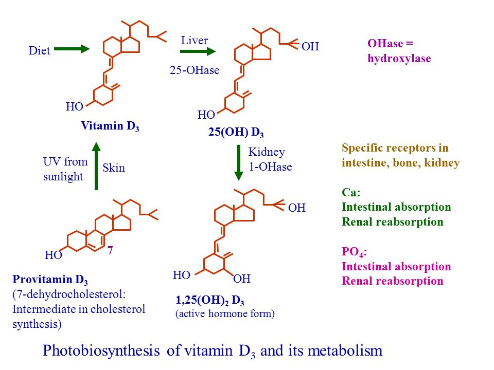 Photobiosynthesis of vitamin D3 and its metabolism