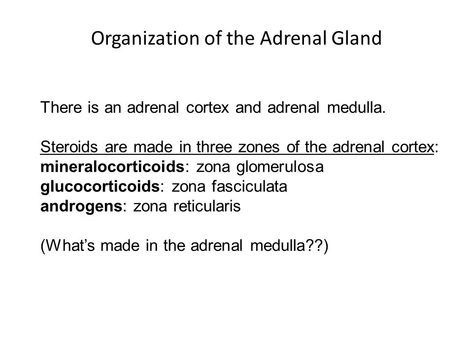Organization of the Adrenal Gland
