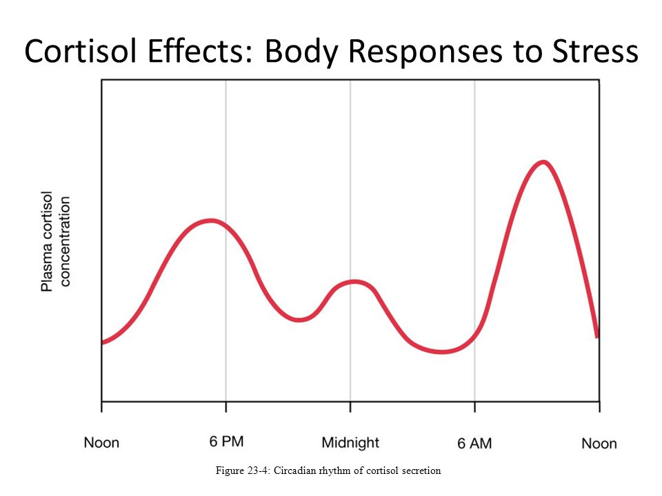 effects of steroid use on the brain