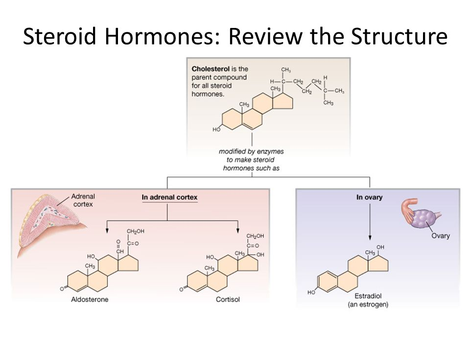 Steroid Hormones: Review the Structure