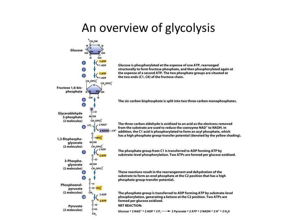 An overview of glycolysis
