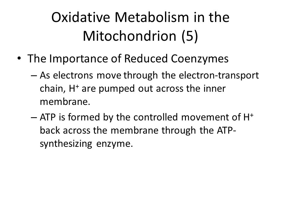 Oxidative Metabolism in the Mitochondrion (5)