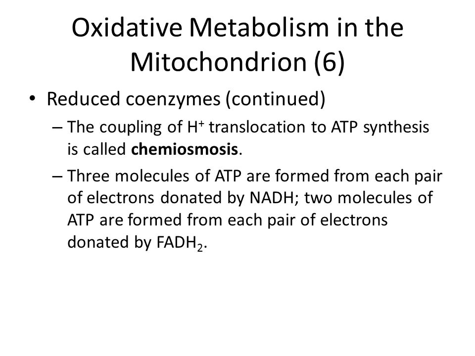 Oxidative Metabolism in the Mitochondrion (6)
