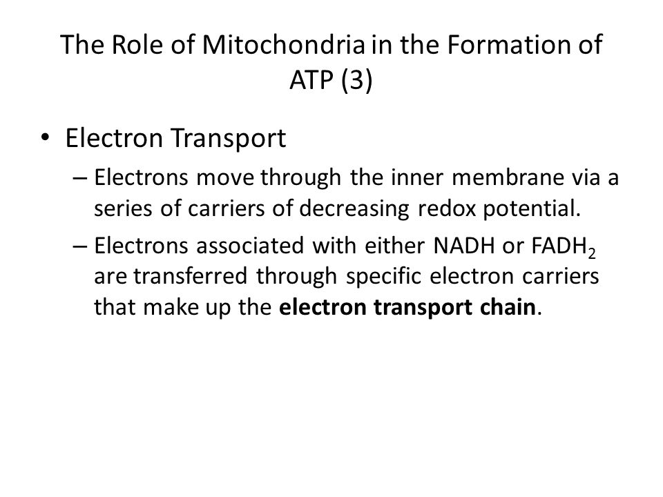 The Role of Mitochondria in the Formation of ATP (3)