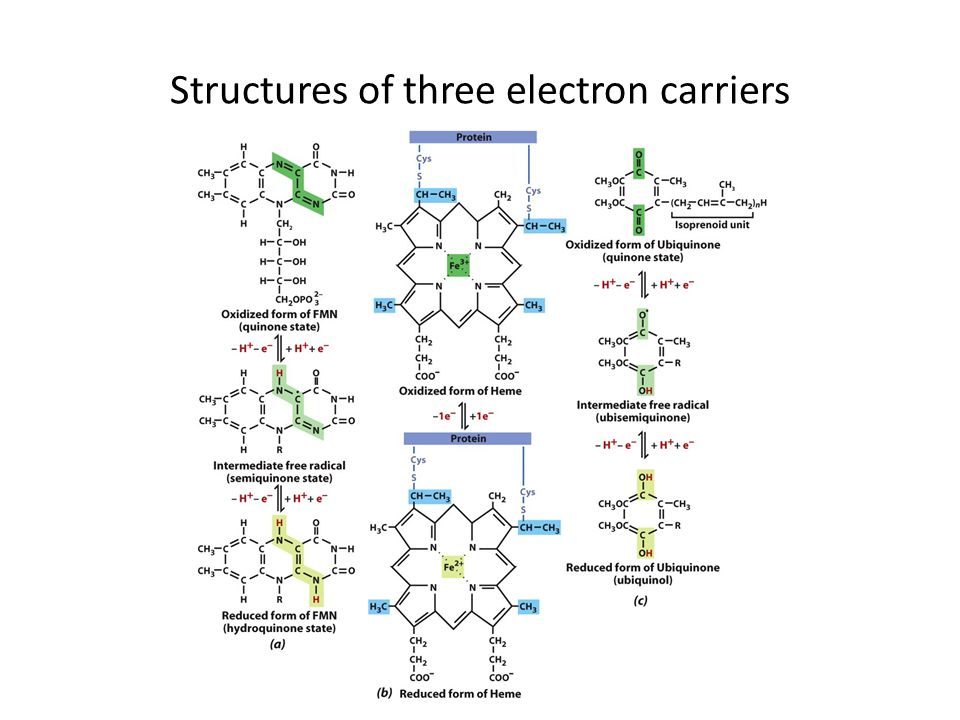 Structures of three electron carriers
