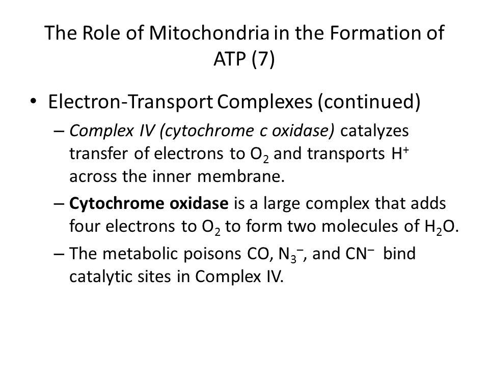 The Role of Mitochondria in the Formation of ATP (7)