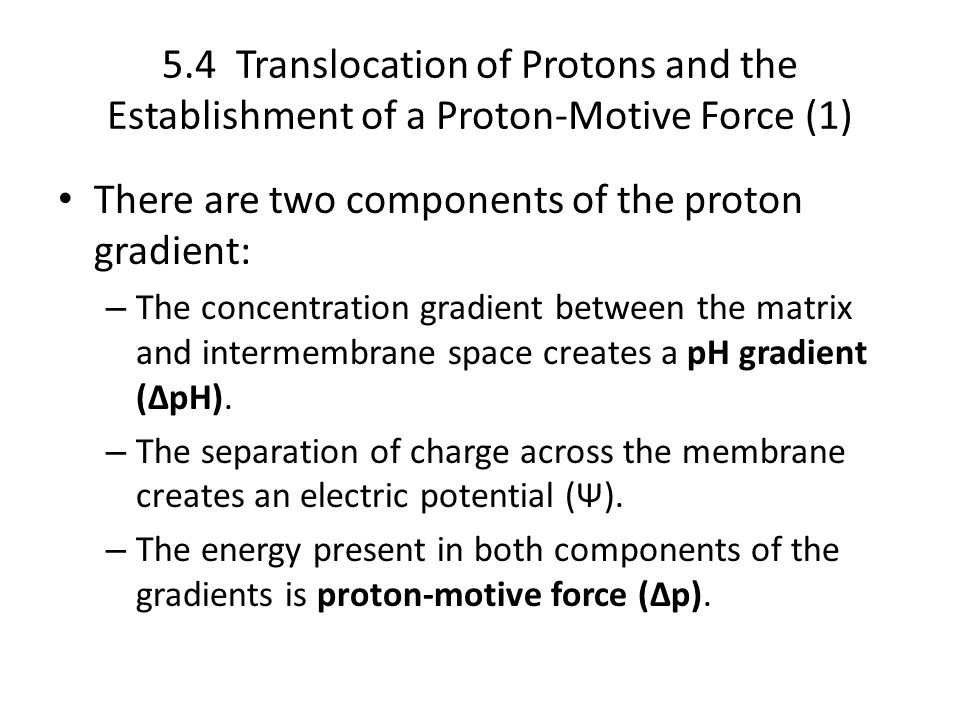 There are two components of the proton gradient: