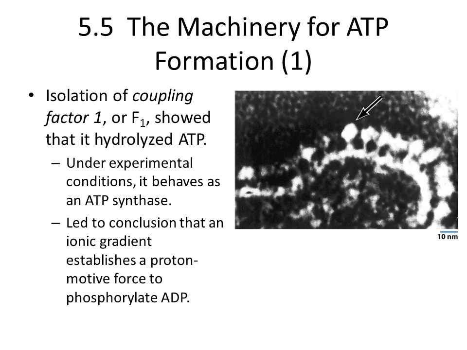 5.5 The Machinery for ATP Formation (1)