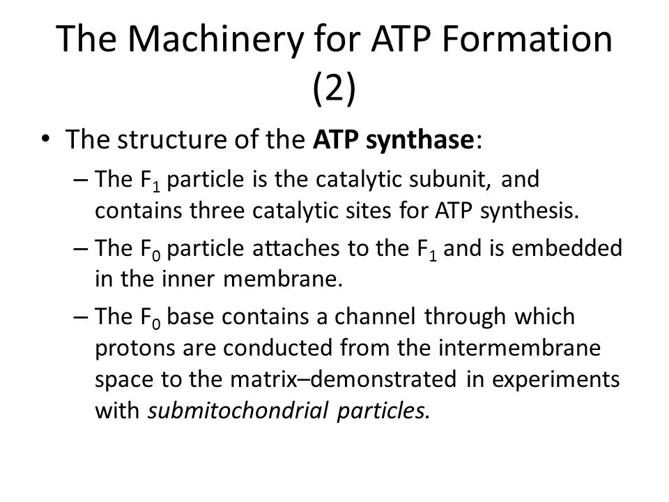 The Machinery for ATP Formation (2)