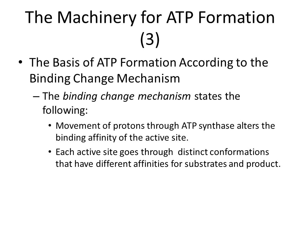 The Machinery for ATP Formation (3)