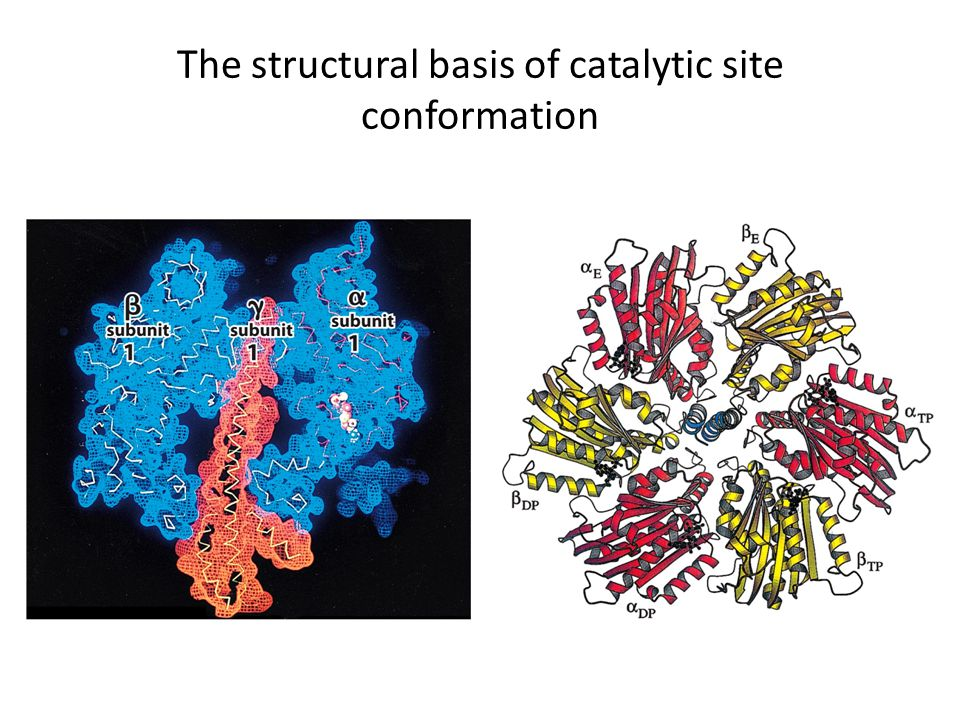 The structural basis of catalytic site conformation