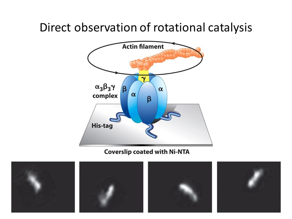 Direct observation of rotational catalysis