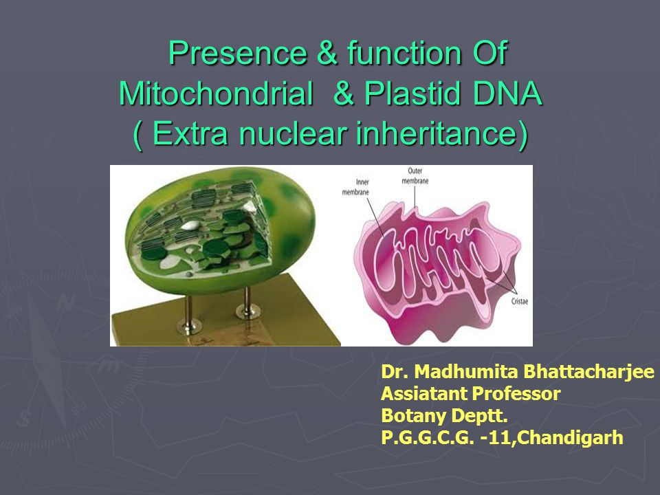 Presence & function Of Mitochondrial & Plastid DNA ( Extra nuclear inheritance)