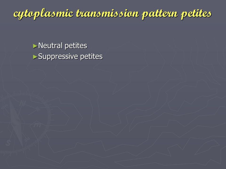 cytoplasmic transmission pattern petites