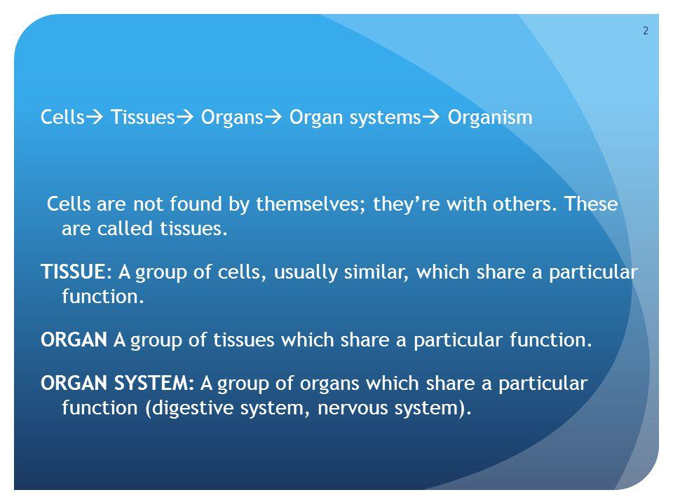 Cells Tissues Organs Organ systems Organism