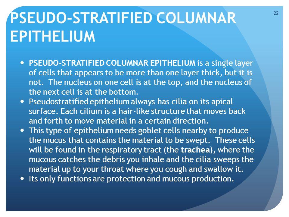 PSEUDO-STRATIFIED COLUMNAR EPITHELIUM
