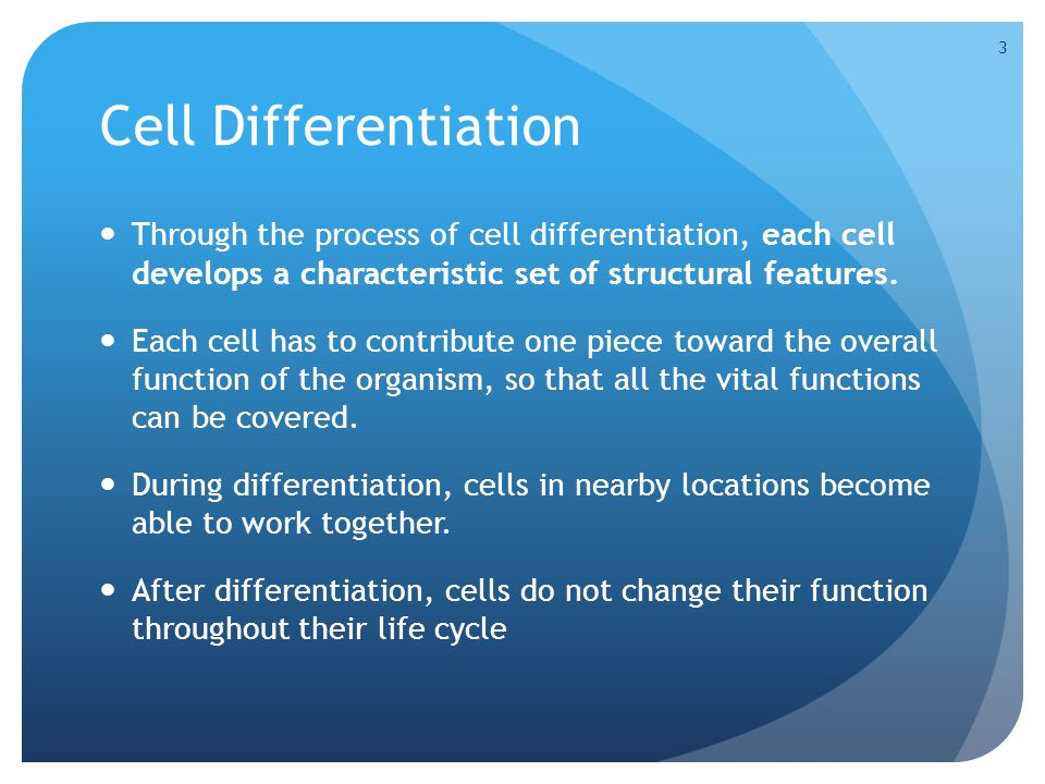 Cell Differentiation Through the process of cell differentiation, each cell develops a characteristic set of structural features.