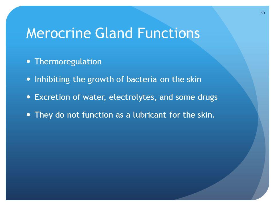 Merocrine Gland Functions