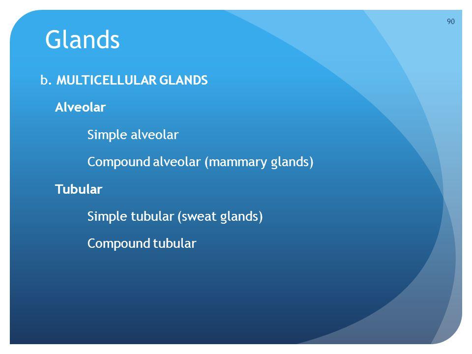 Glands b. MULTICELLULAR GLANDS Alveolar Simple alveolar