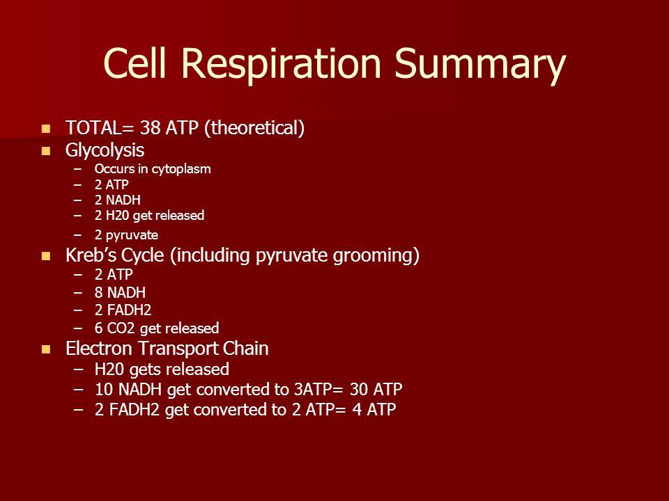 Cell Respiration Summary