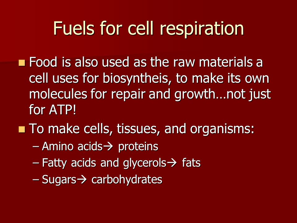 Fuels for cell respiration