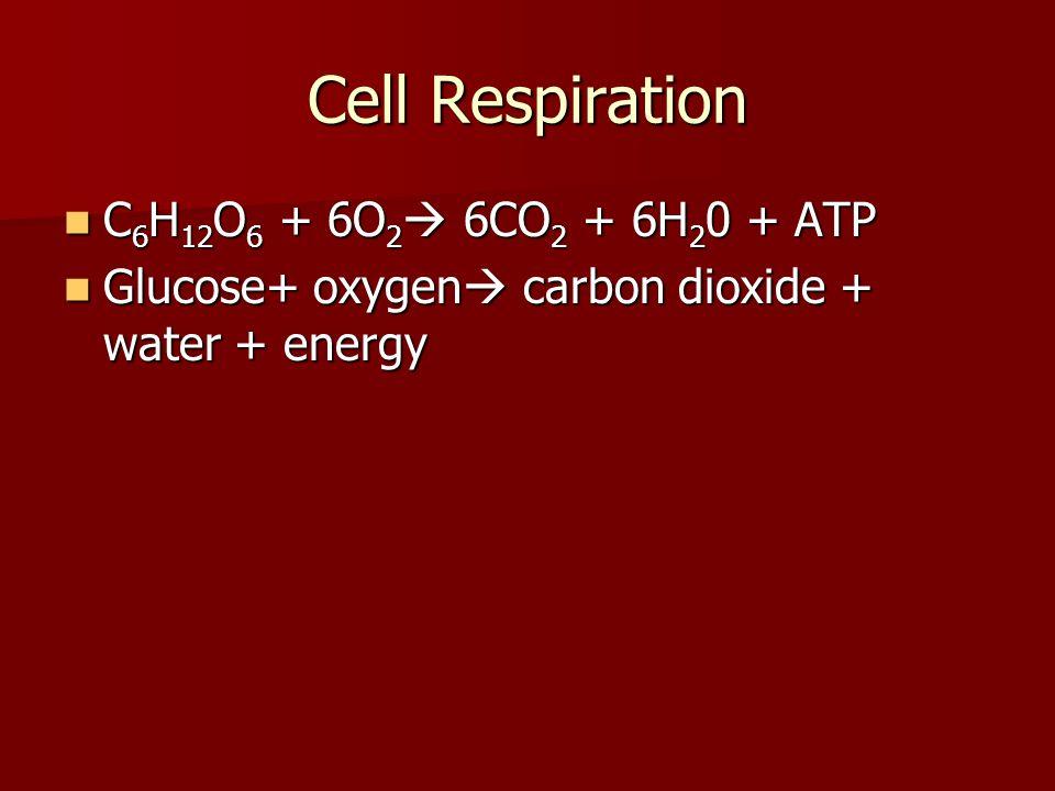 Cell Respiration C6H12O6 + 6O2 6CO2 + 6H20 + ATP