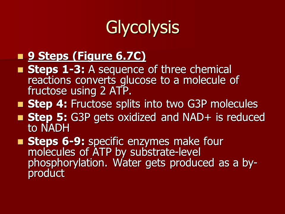 Glycolysis 9 Steps (Figure 6.7C)