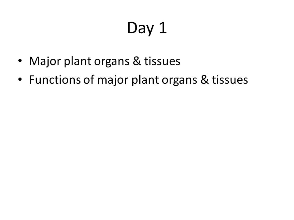Day 1 Major plant organs & tissues