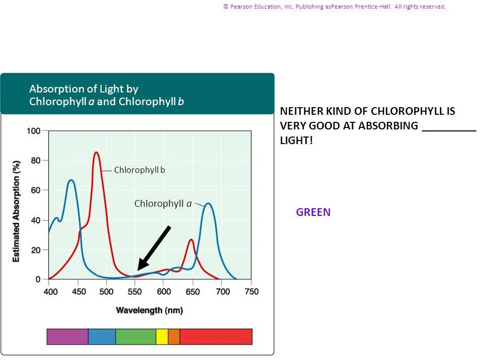 Chlorophyll a and Chlorophyll b