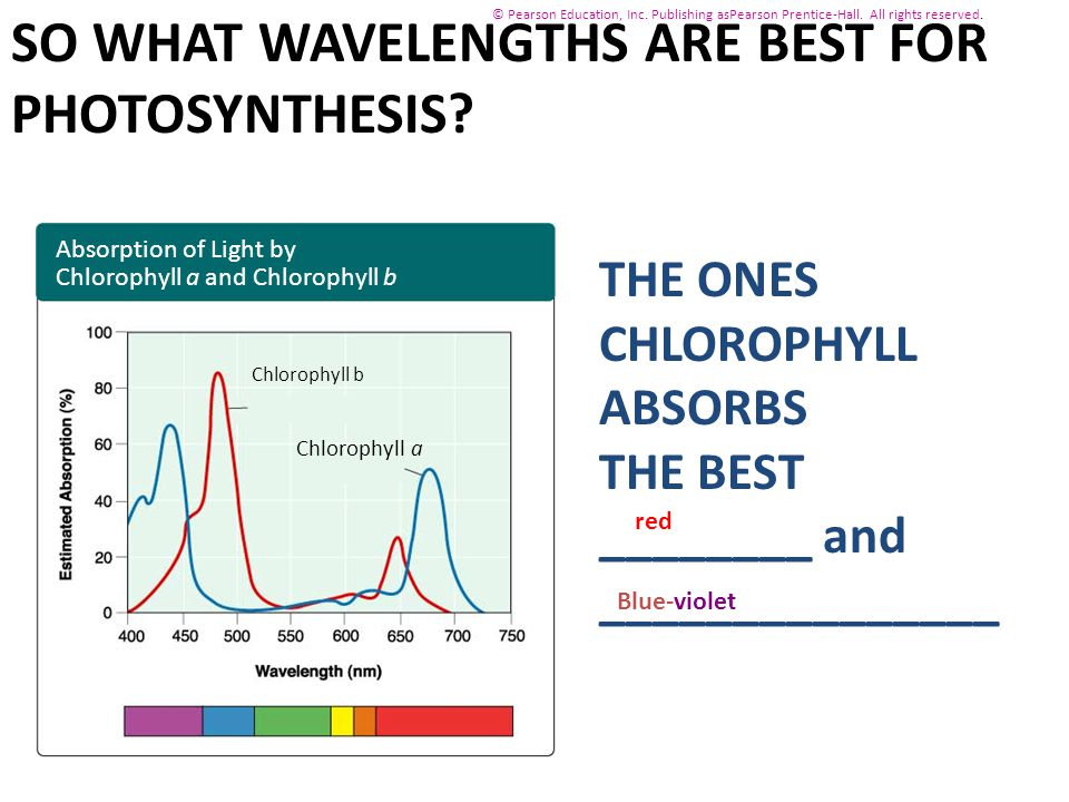 SO WHAT WAVELENGTHS ARE BEST FOR PHOTOSYNTHESIS